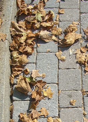 autumn-leaves-small